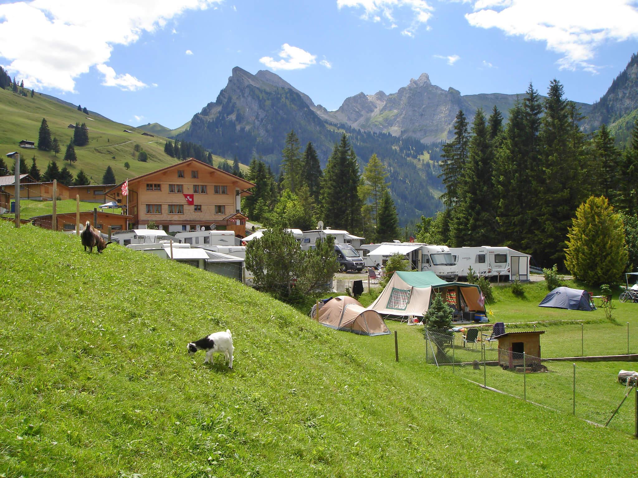 Camping Sommer Ziegen Wohnmobil Zelt Camper