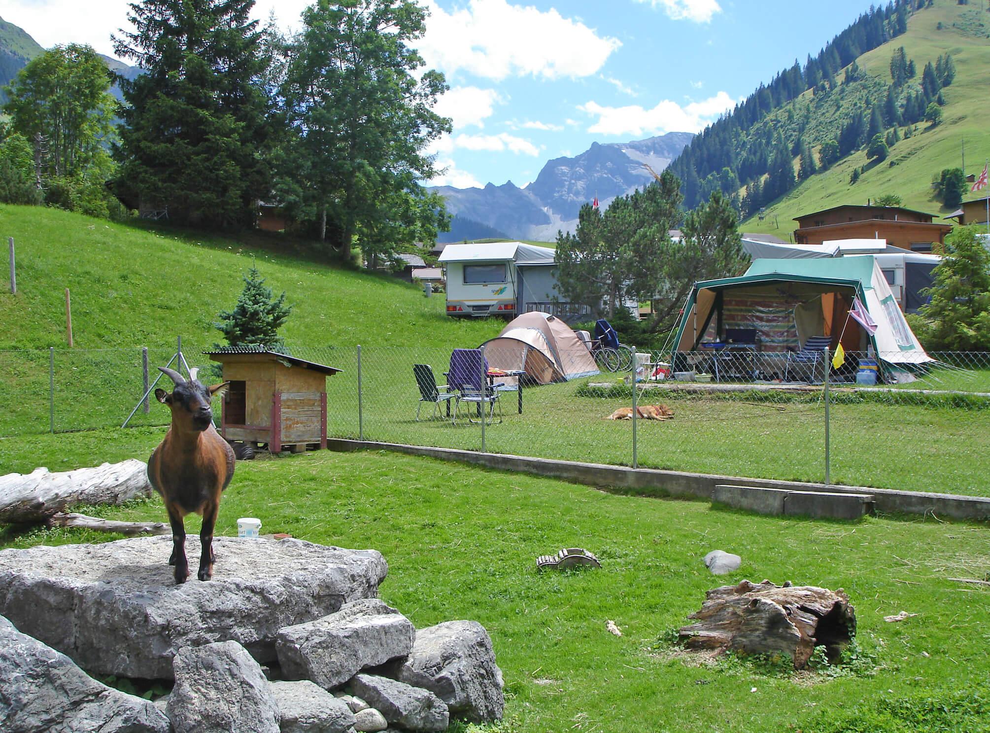 Kleintiergehege Ziegen Zelte