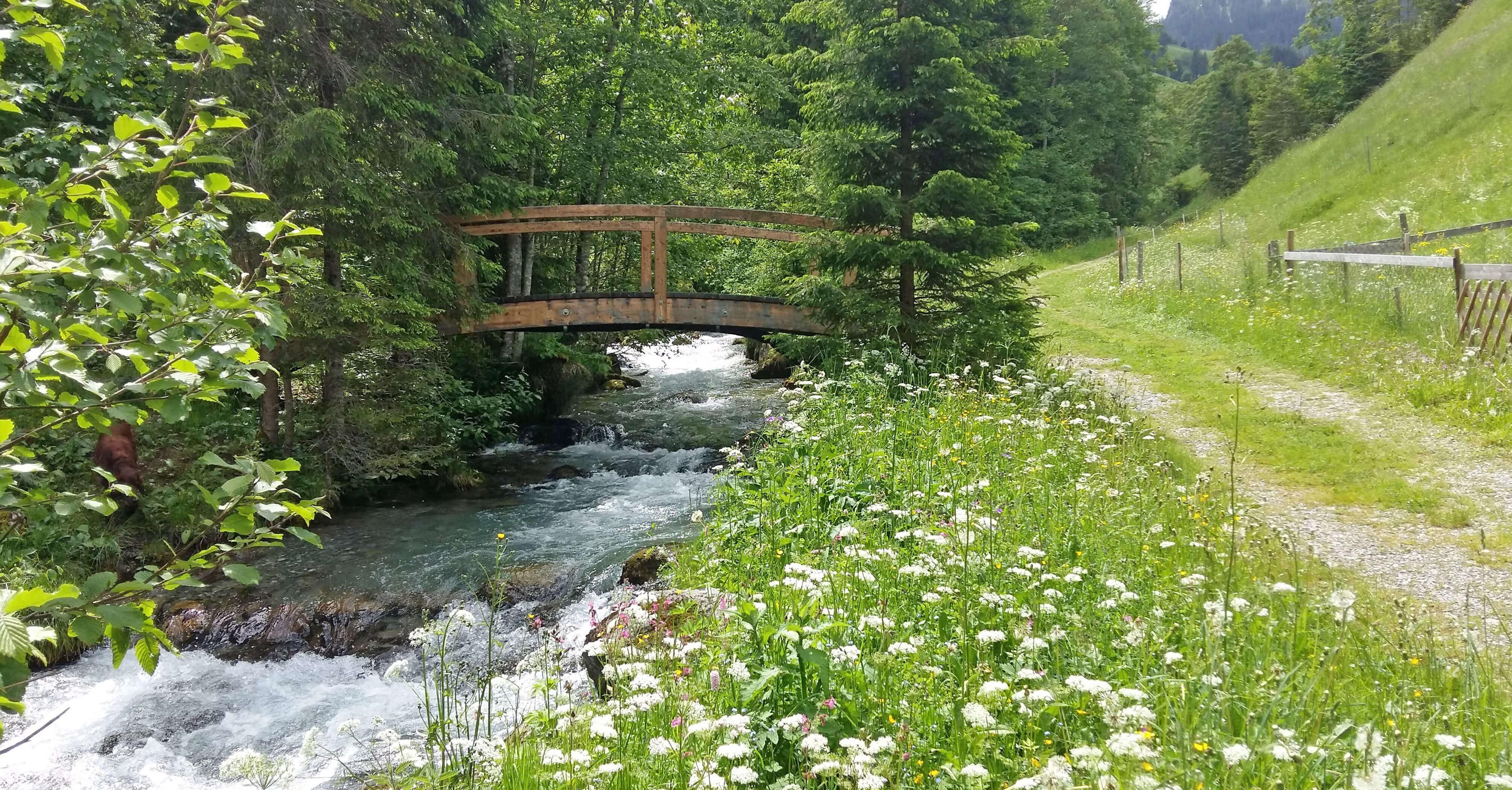 Grabenweidli Wanderweg Sommer Brücke Bach
