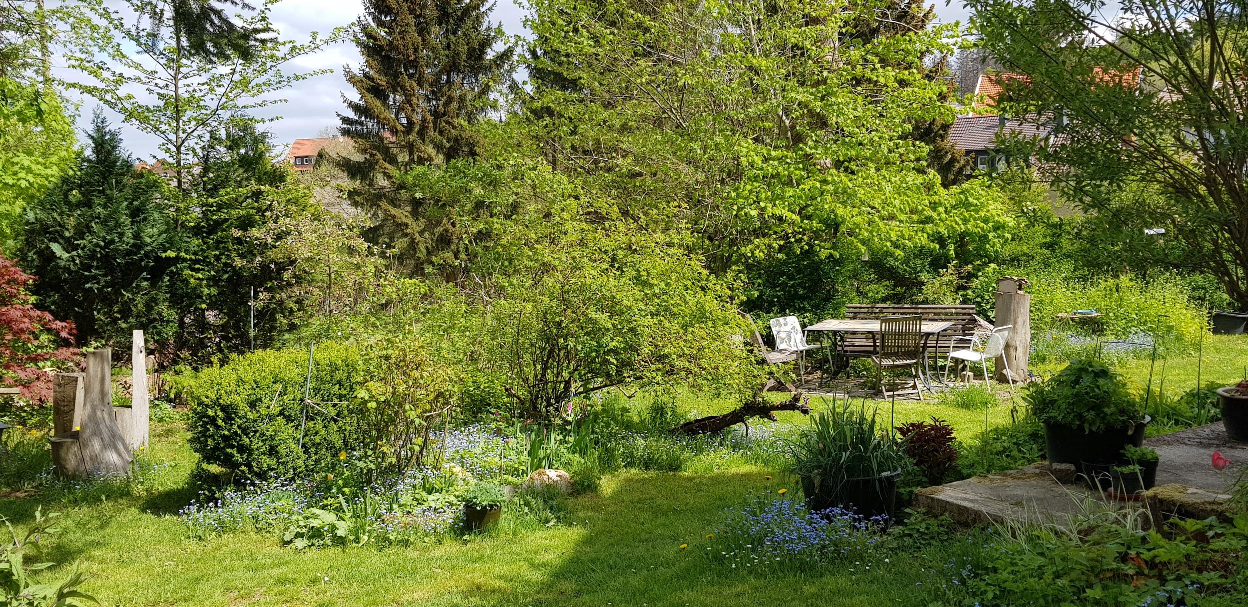 Ferienwohnungen Trollblume und Schlüsselblume in Hohegeiß - Garten