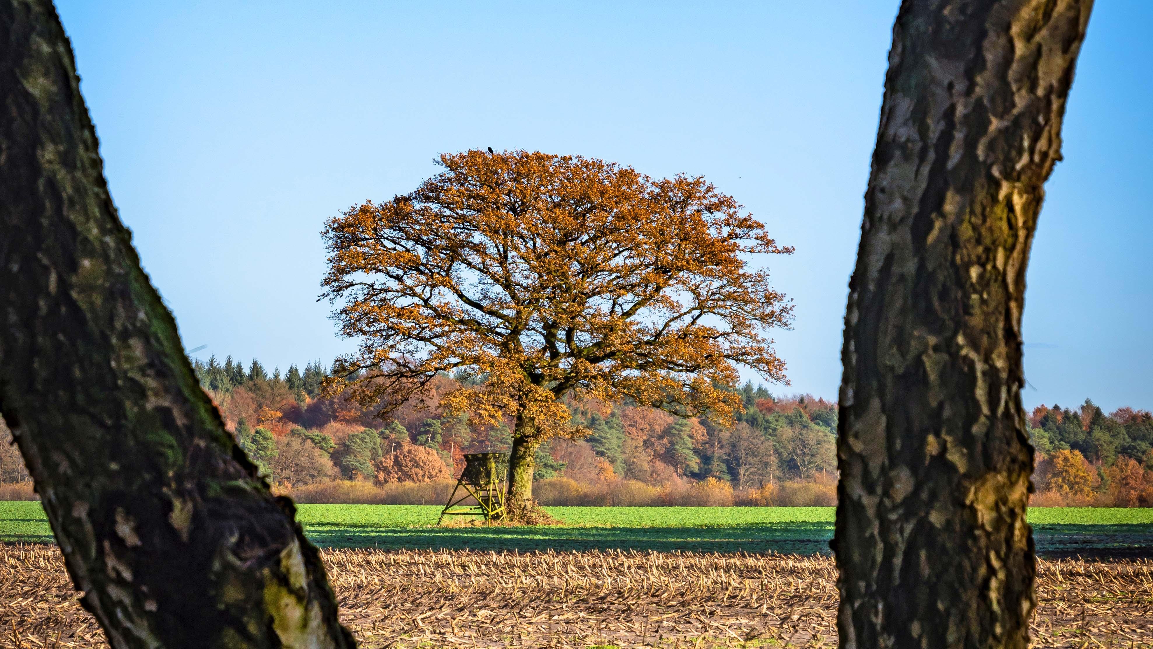 Immer wieder eine tolle Land-Baum-Marke ... kurz vor dem Schafstall in Unterstedt