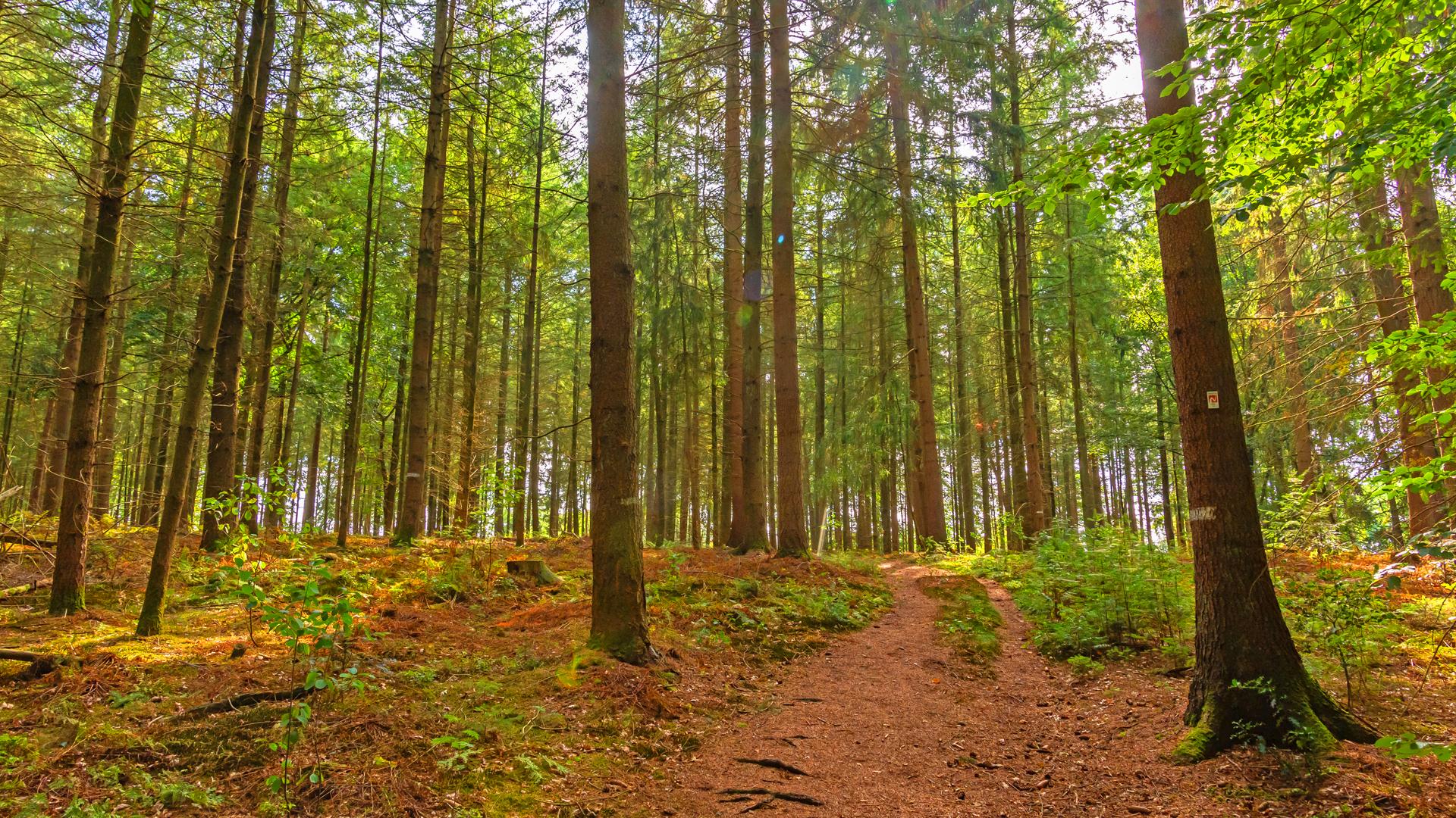 Ein letzter Abschnitt durch den dichten Kuhmühler Wald