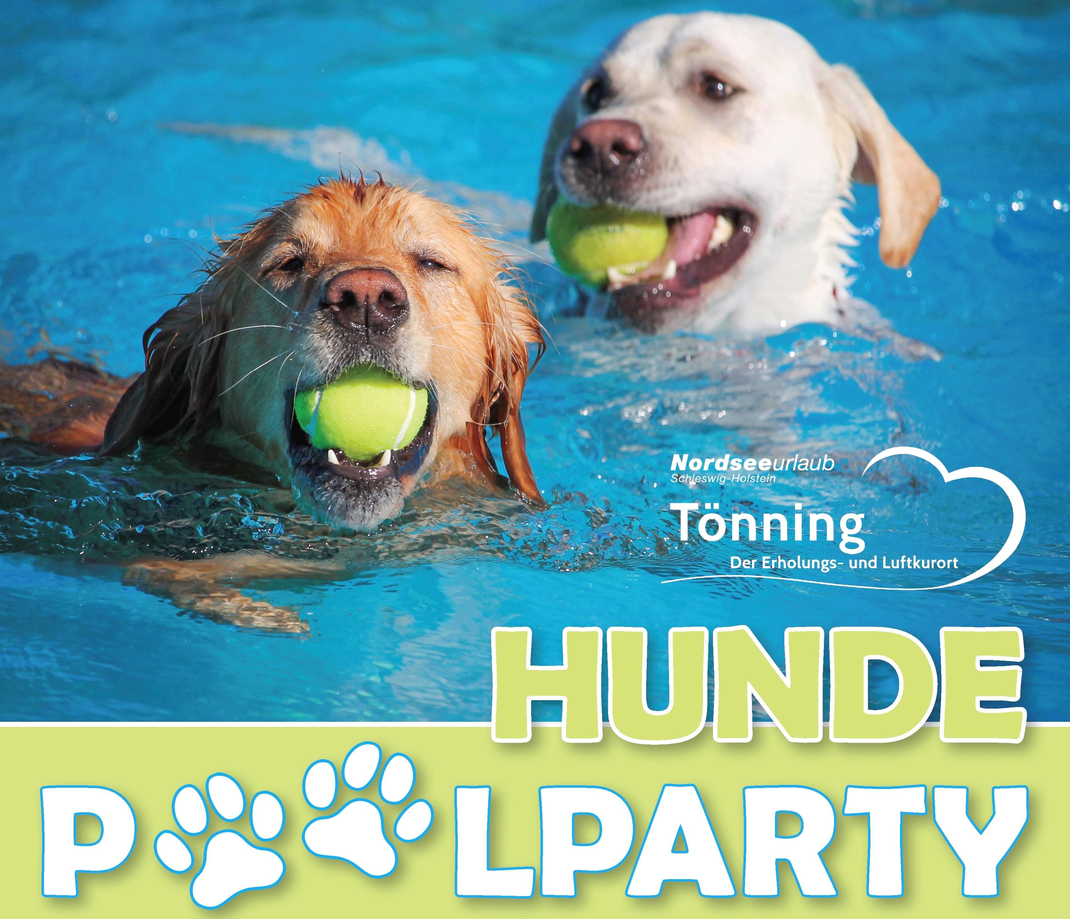 Bild-Hunde-Poolparty-Toenning