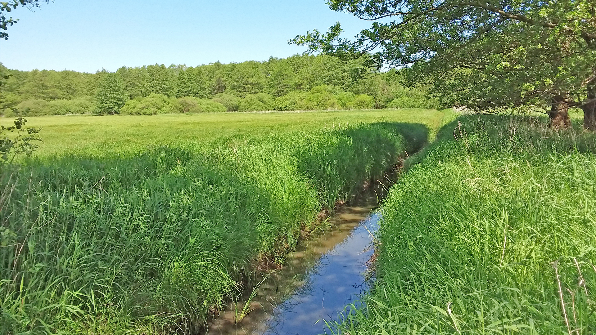 Der Glindbach im Naturschutzgebiet Glindbusch
