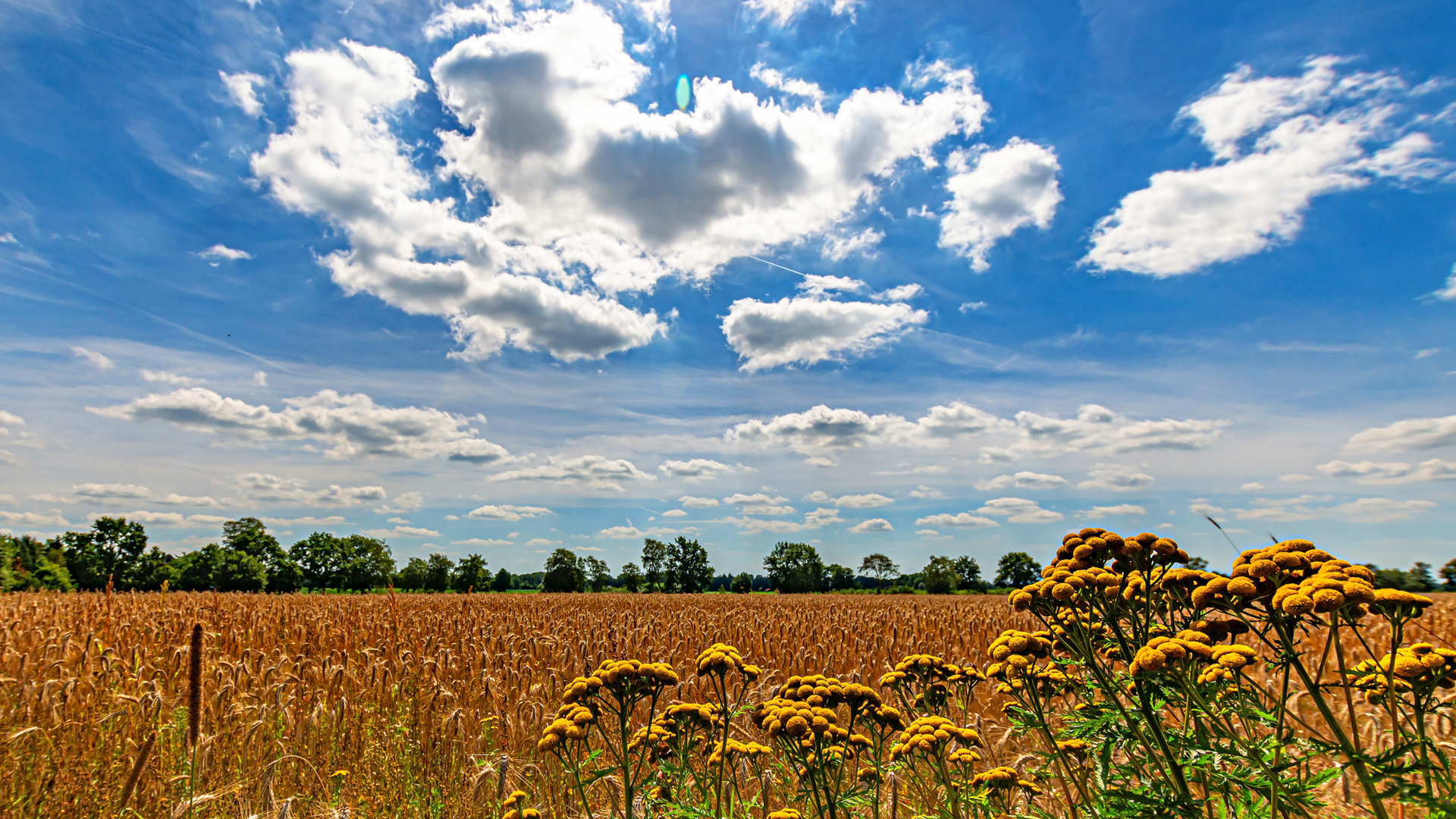 Getreide, Rainfarn, Ruhe - die Landschaft bei Mulmshorn