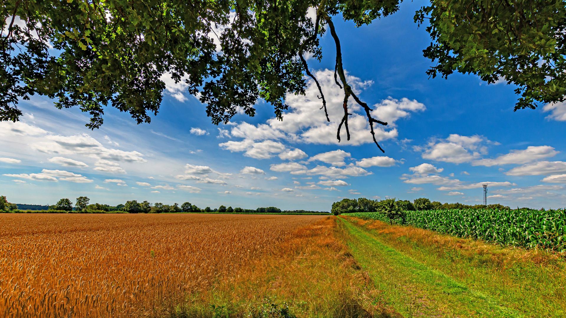 Landwirtschaft und Weite prägen die Gegend rund um Mulmshorn