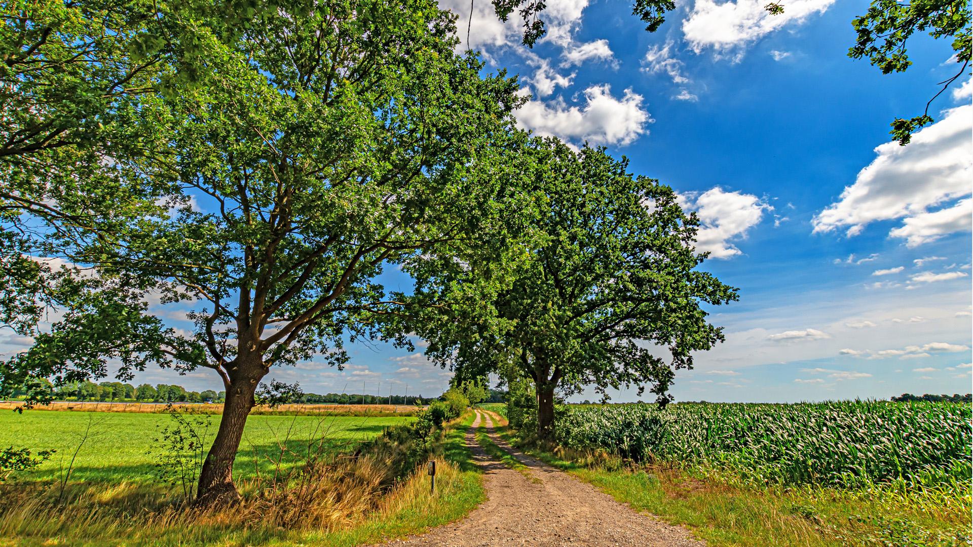 Wunderbare Wanderwege inmitten der landwirtschaftlich geprägten Gegend rund um Mulmshorn