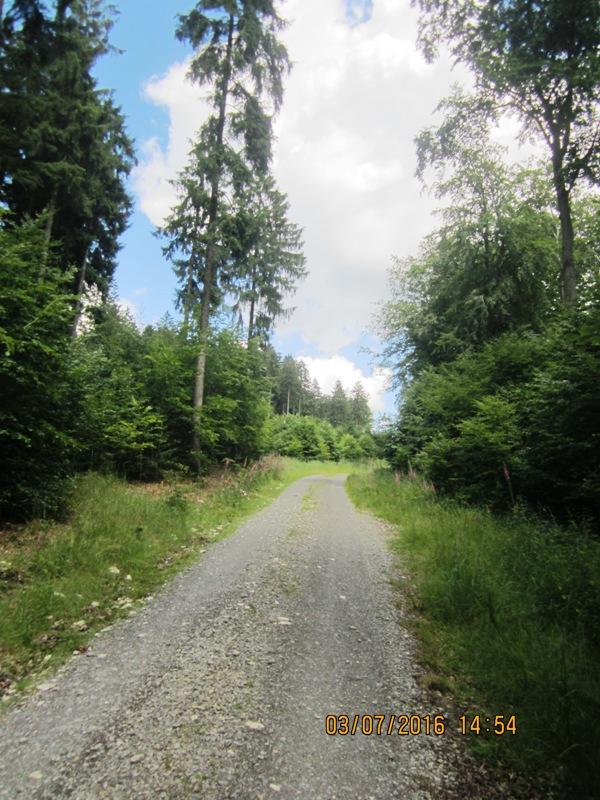 Auf-und abwärts auf gut fahrbaren Forstwegen am oberen Langenberg