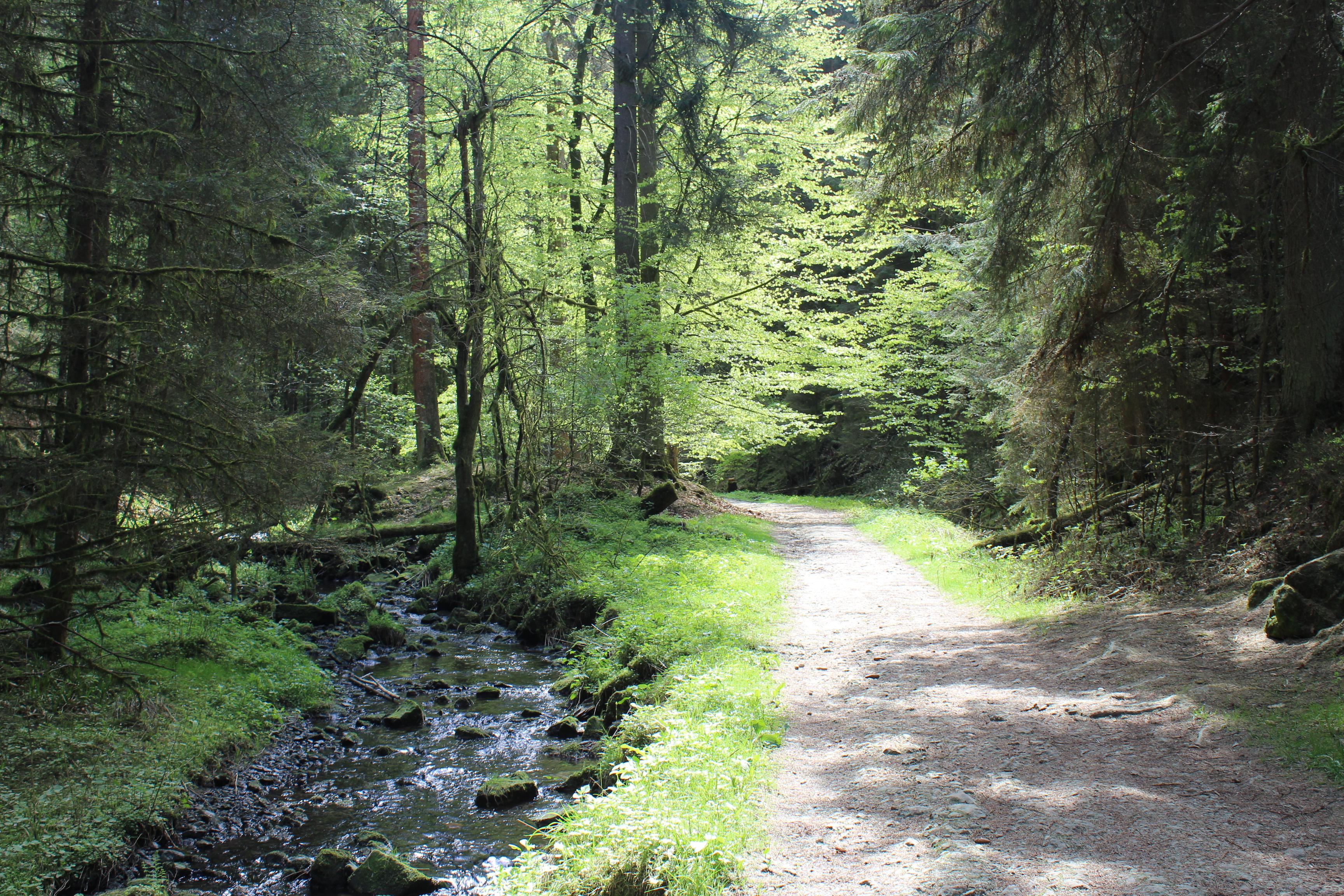 Silberbach mit Weg