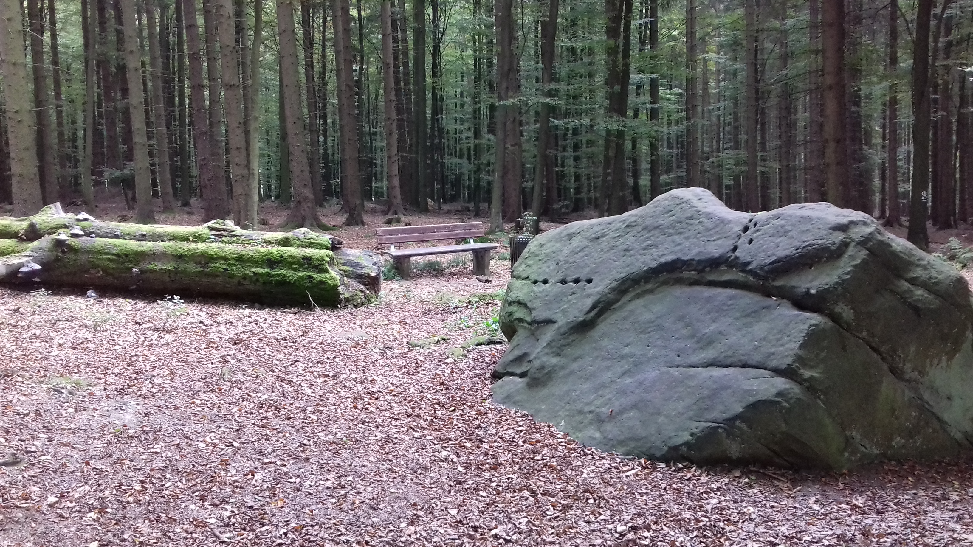 Leistruper Wald Route