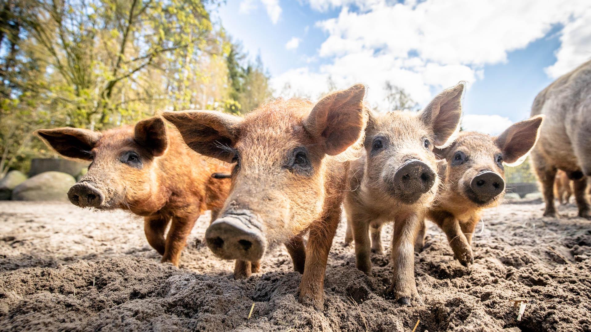 wildpark-luenburger-heide-wildschweine.jpg
