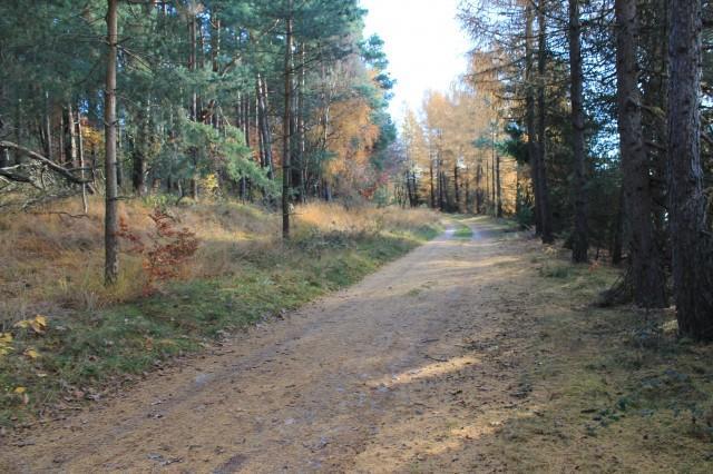Rundwanderweg O II Sennerandweg Lönspfad