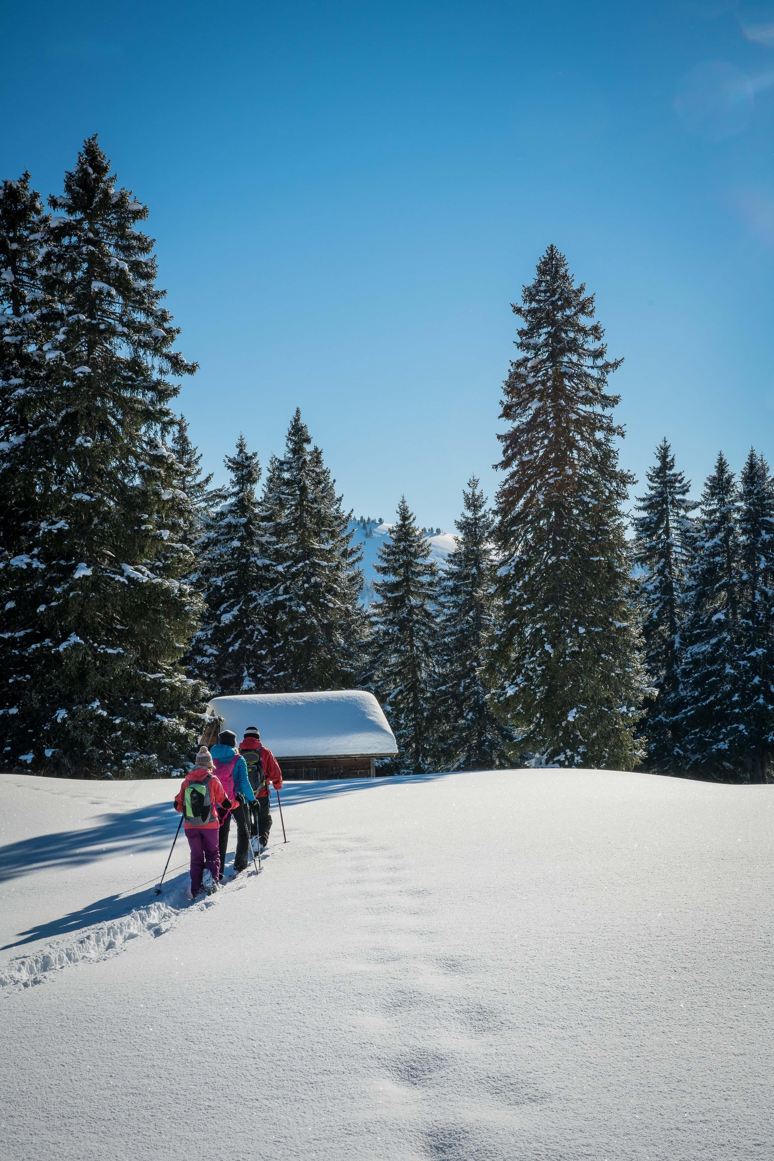 habkern-lombachalp-winter-schneeschuhlaufen-wald-huettli-soft-adventure-hoch
