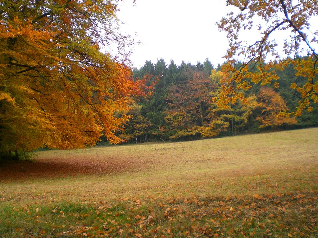 Eiberg - Herbst