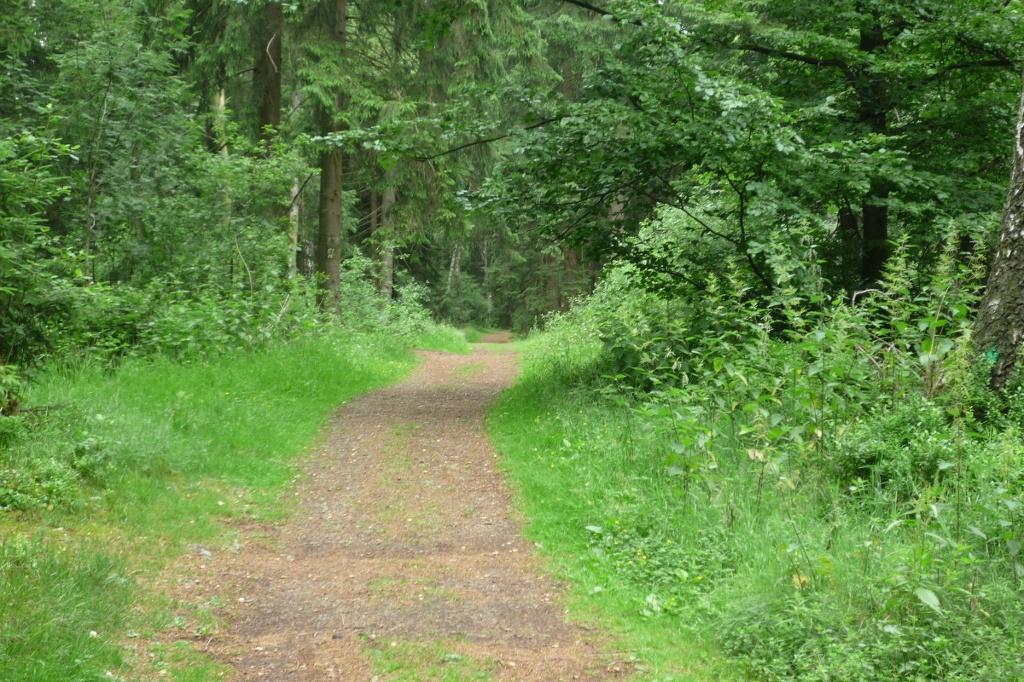 Schöner Waldweg