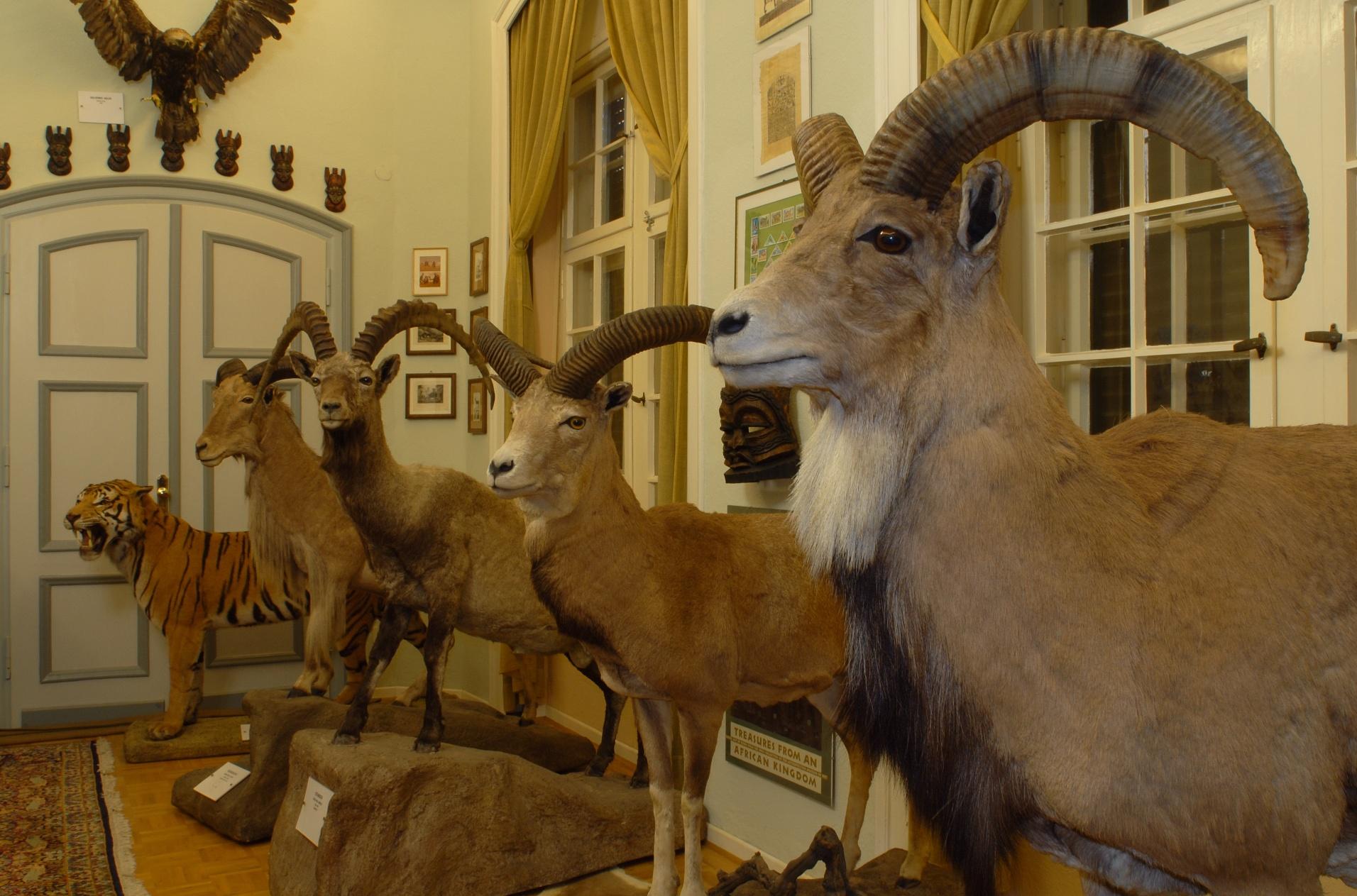Wasserschloss Heerse - Vereinigte Museen - Museum für Naturkunde