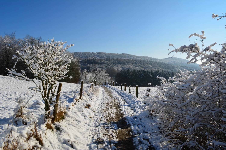 Winterwandern im NSG Jakobsberg