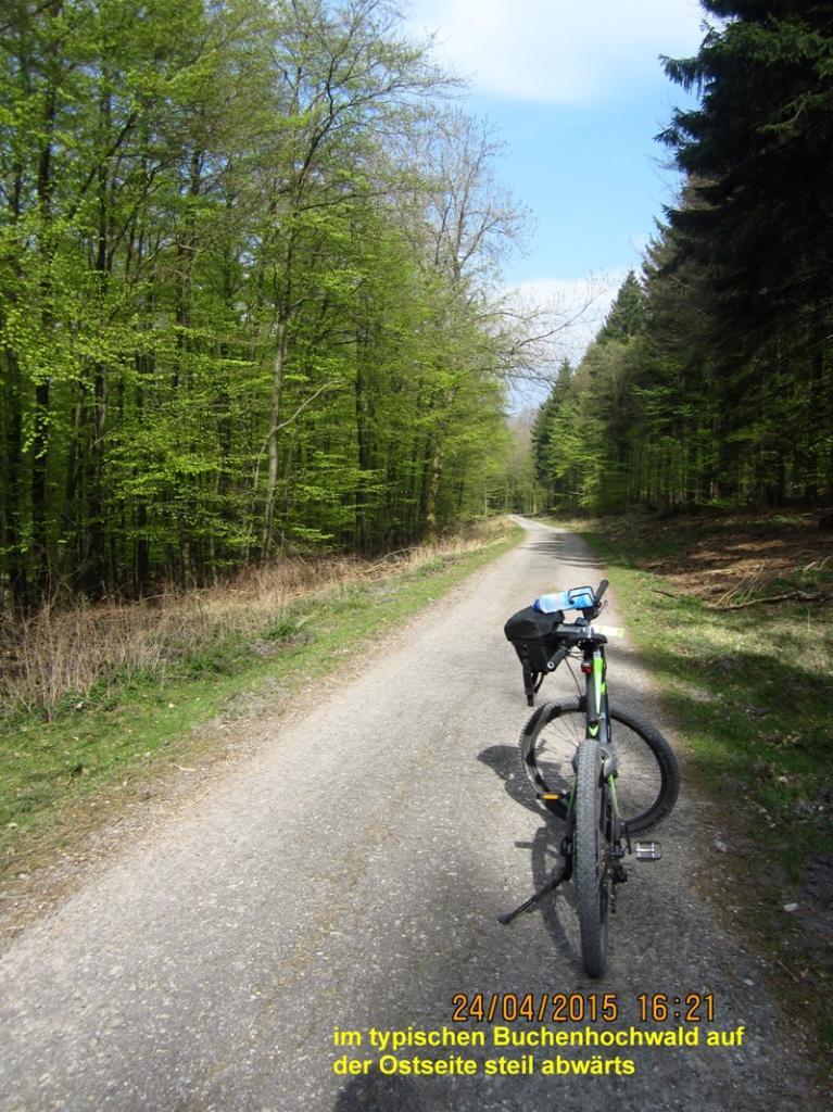 Breite Forstwege führen kreuz und quer über die Höhen des Teutoburger Waldes