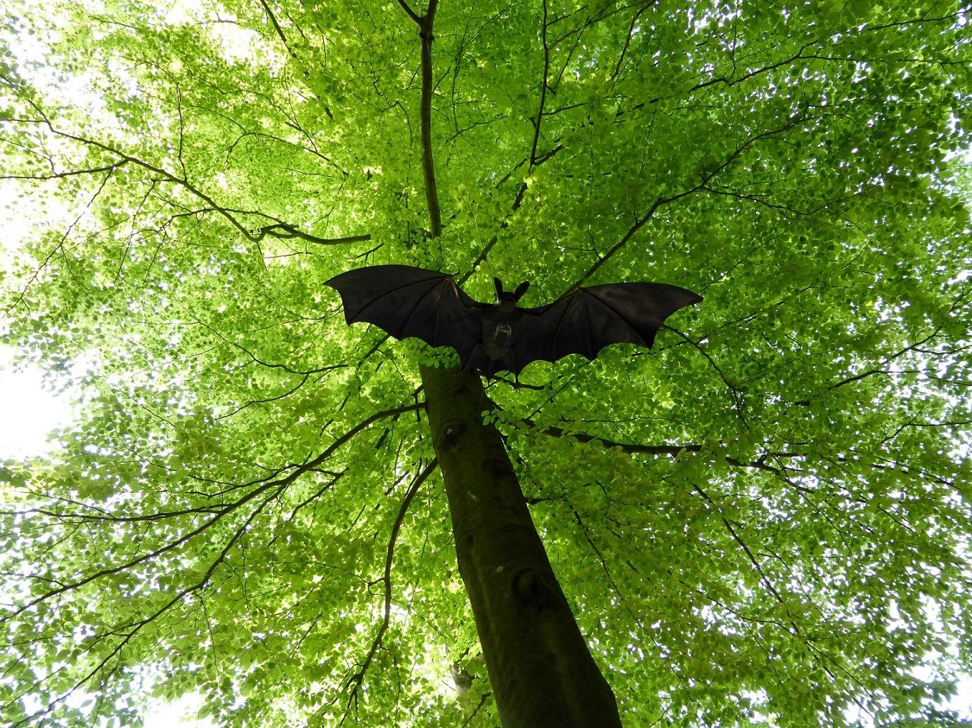 10-Fledermauswanderung.jpg