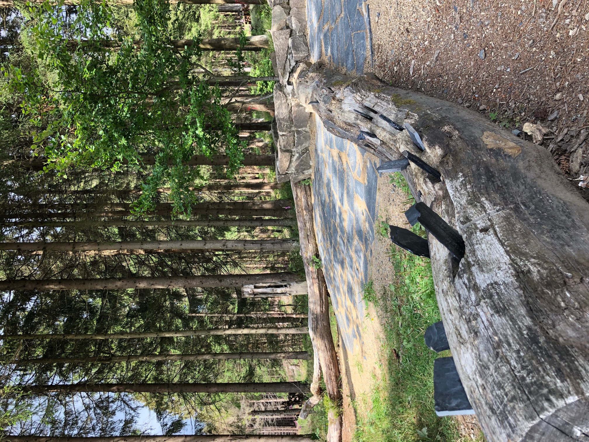 braunlage-naturmythenpfad-wunschbaum(c)btmg.jpg