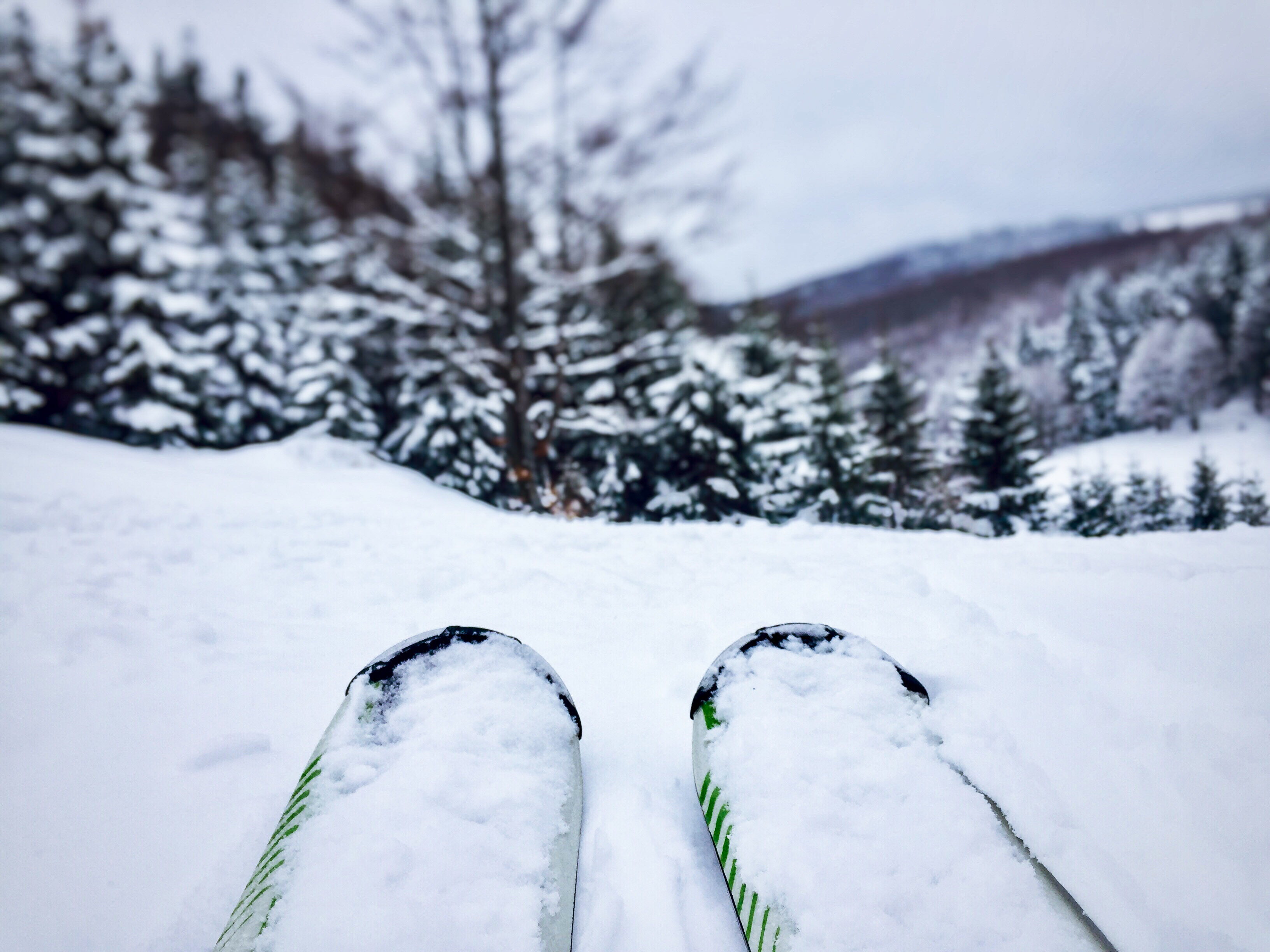 close-up-of-skis-with-snowy-evergreen-forest-ahead-Z6PTJF7.jpg
