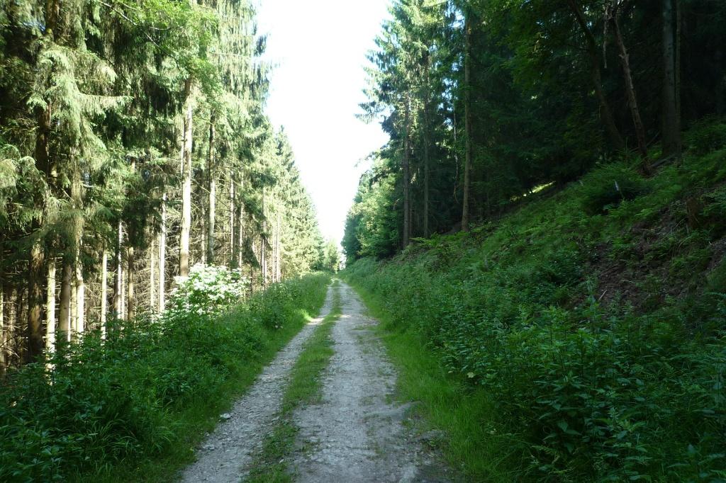 Leichter Anstieg entlang der Wälder