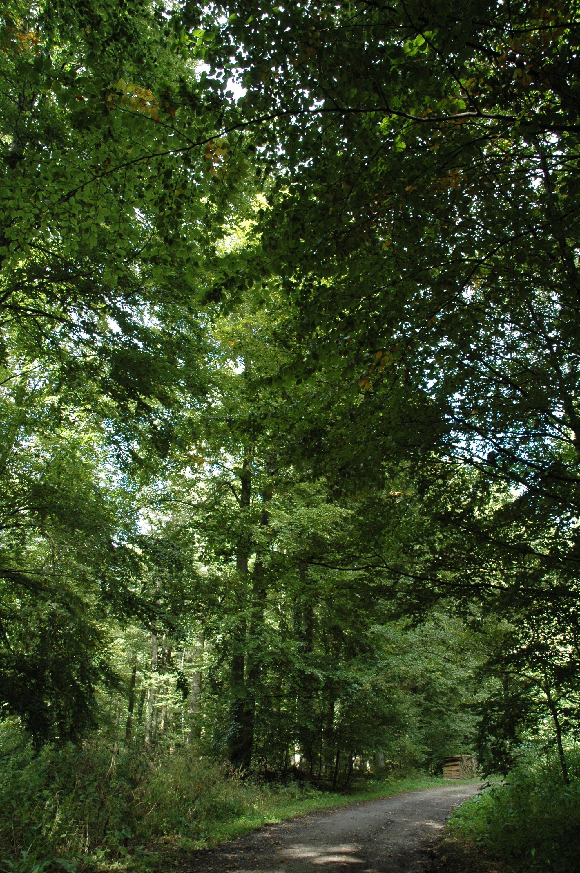 Weg im Steinheimer Holz