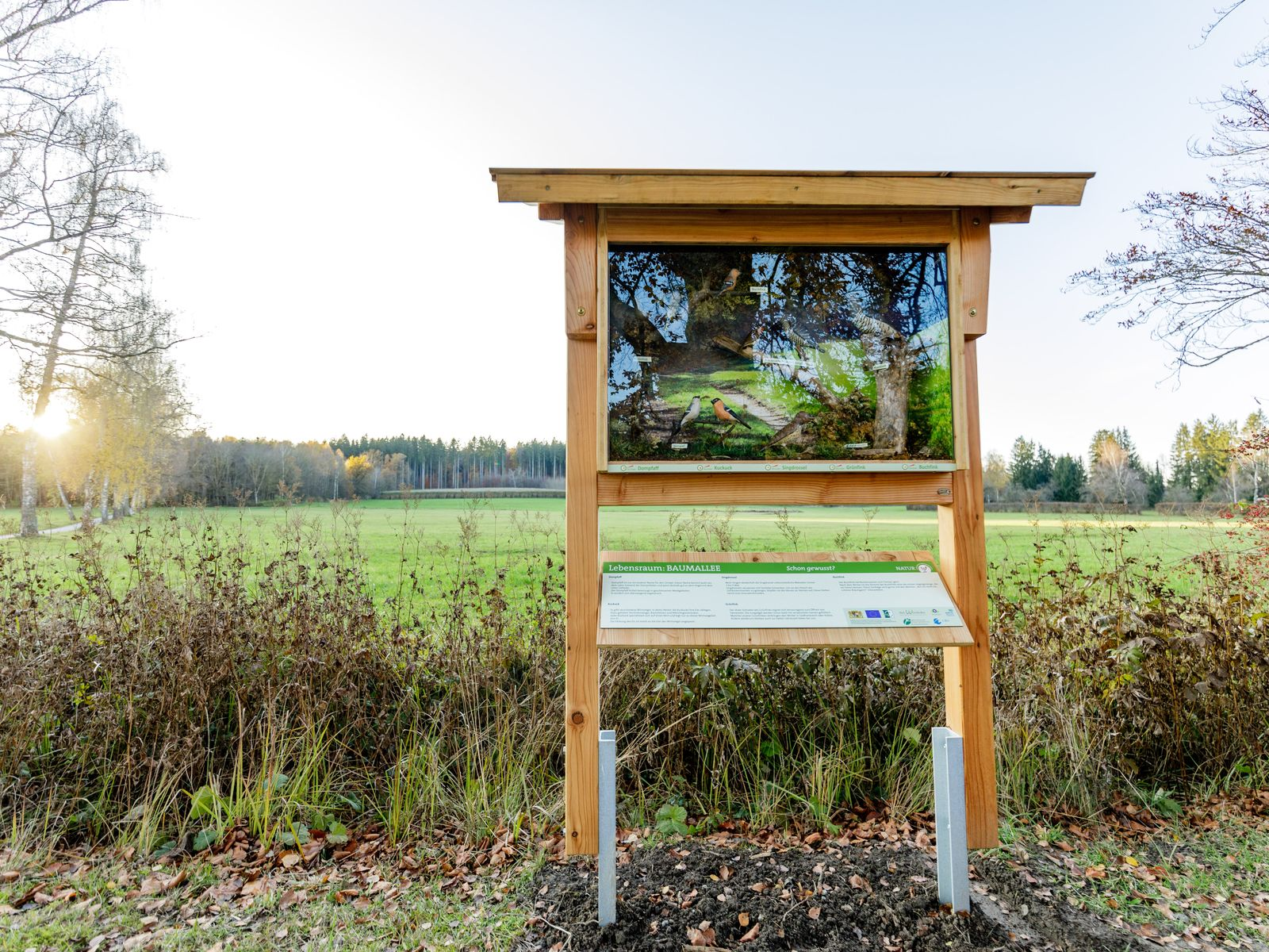 "Naturerlebnisroute ""Buntspecht & Co"" - Station Vogelschaukasten Baumallee"