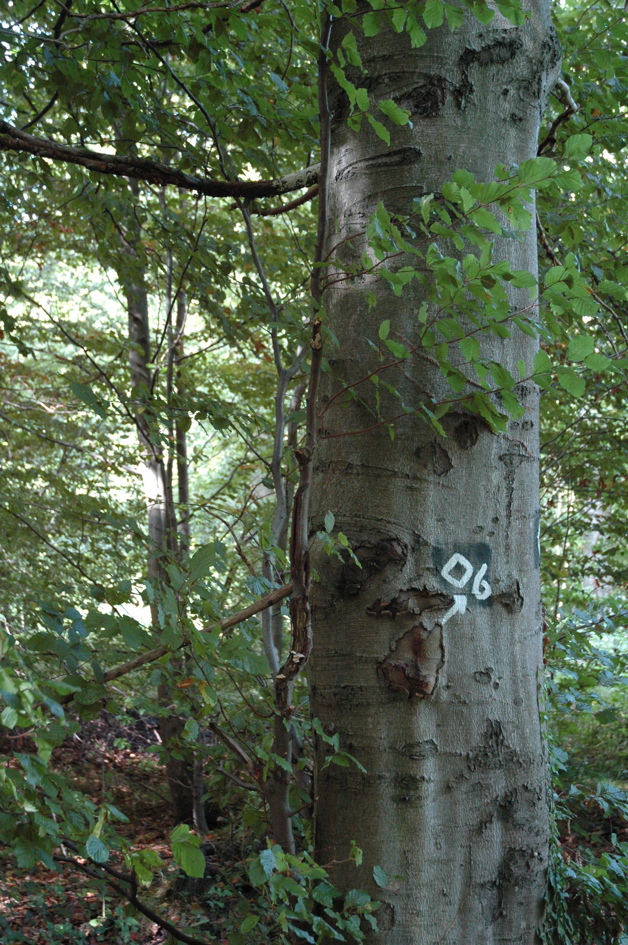 Baumbestand
