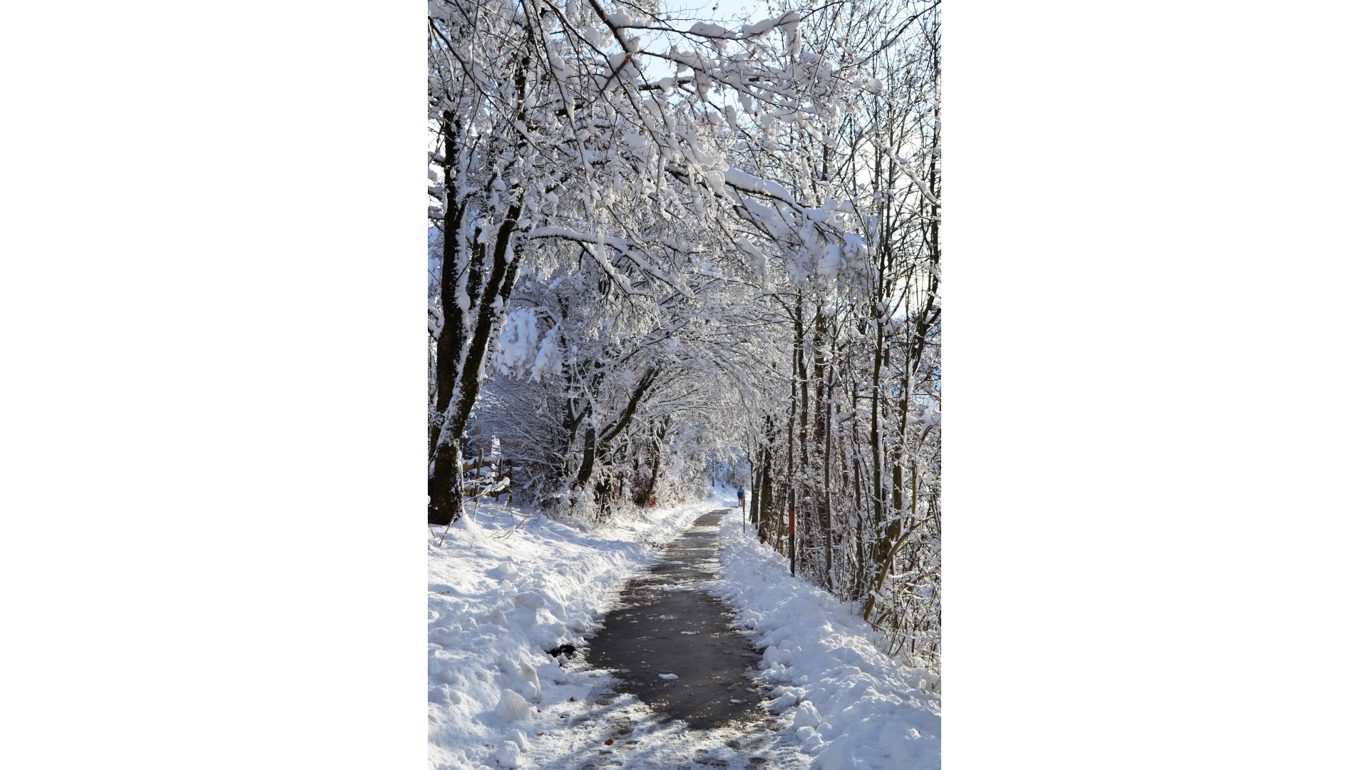 Winterwanderweg_Haus-Scheidegg