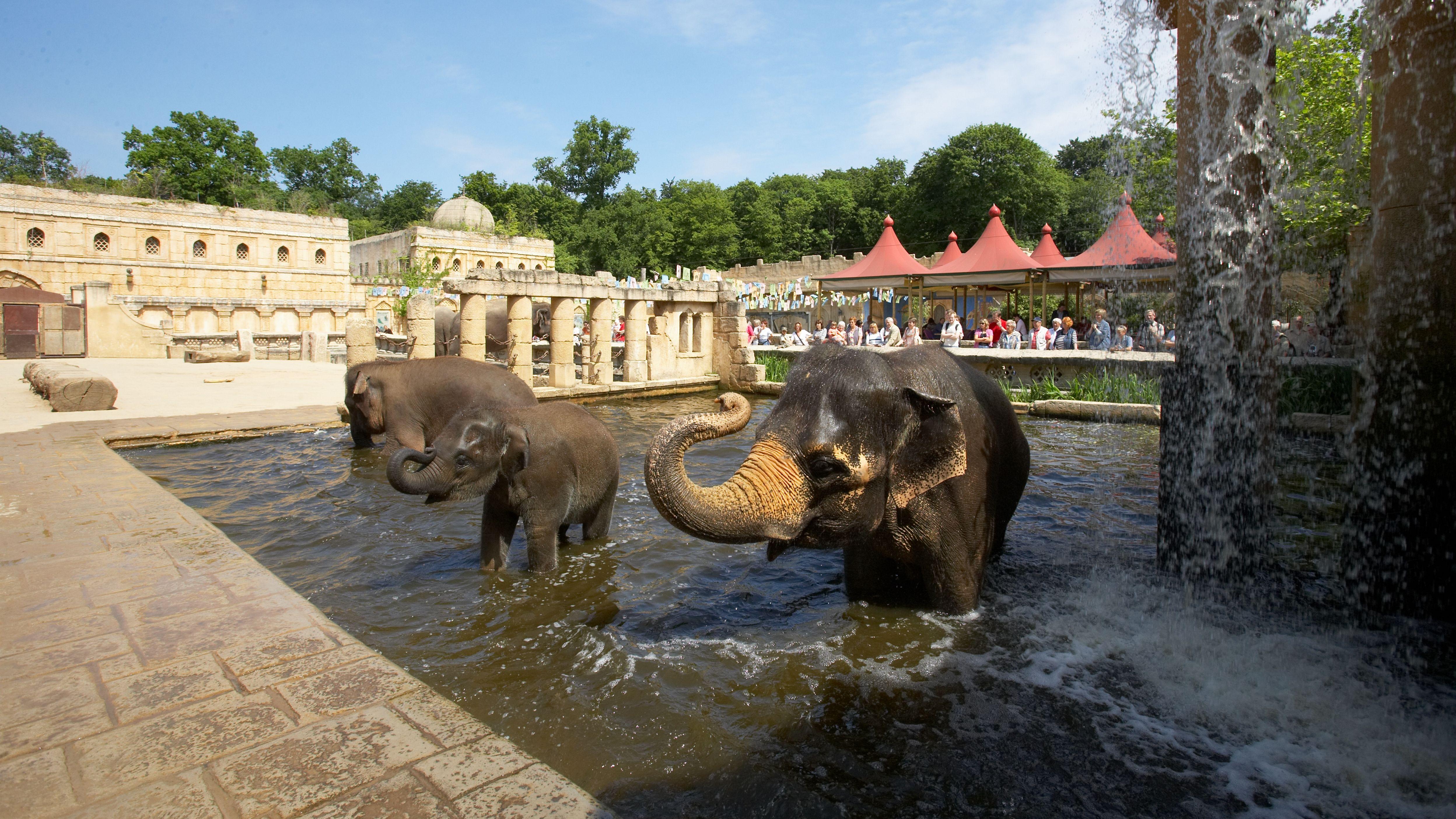 erlebnis-zoo-hannover-elefanten-baden-a