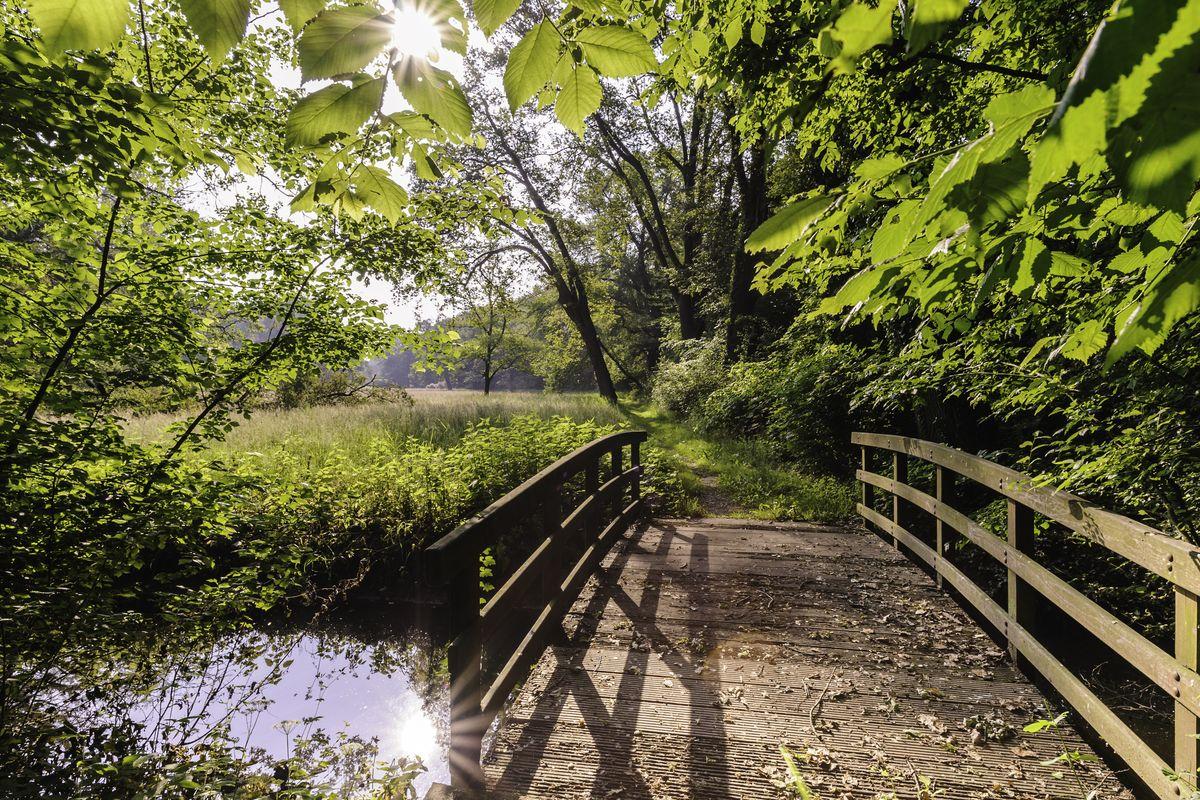 Über Brücken durch den Klosterpark