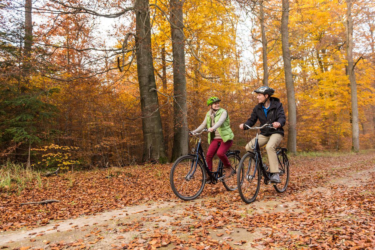 Radfahrer im herbstlichen Lüßwald