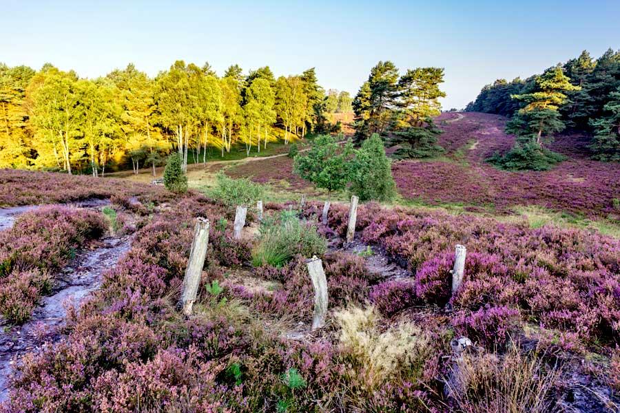 Die Misselhorner Heide auf dem Radweg Naturpark Südheide Tour