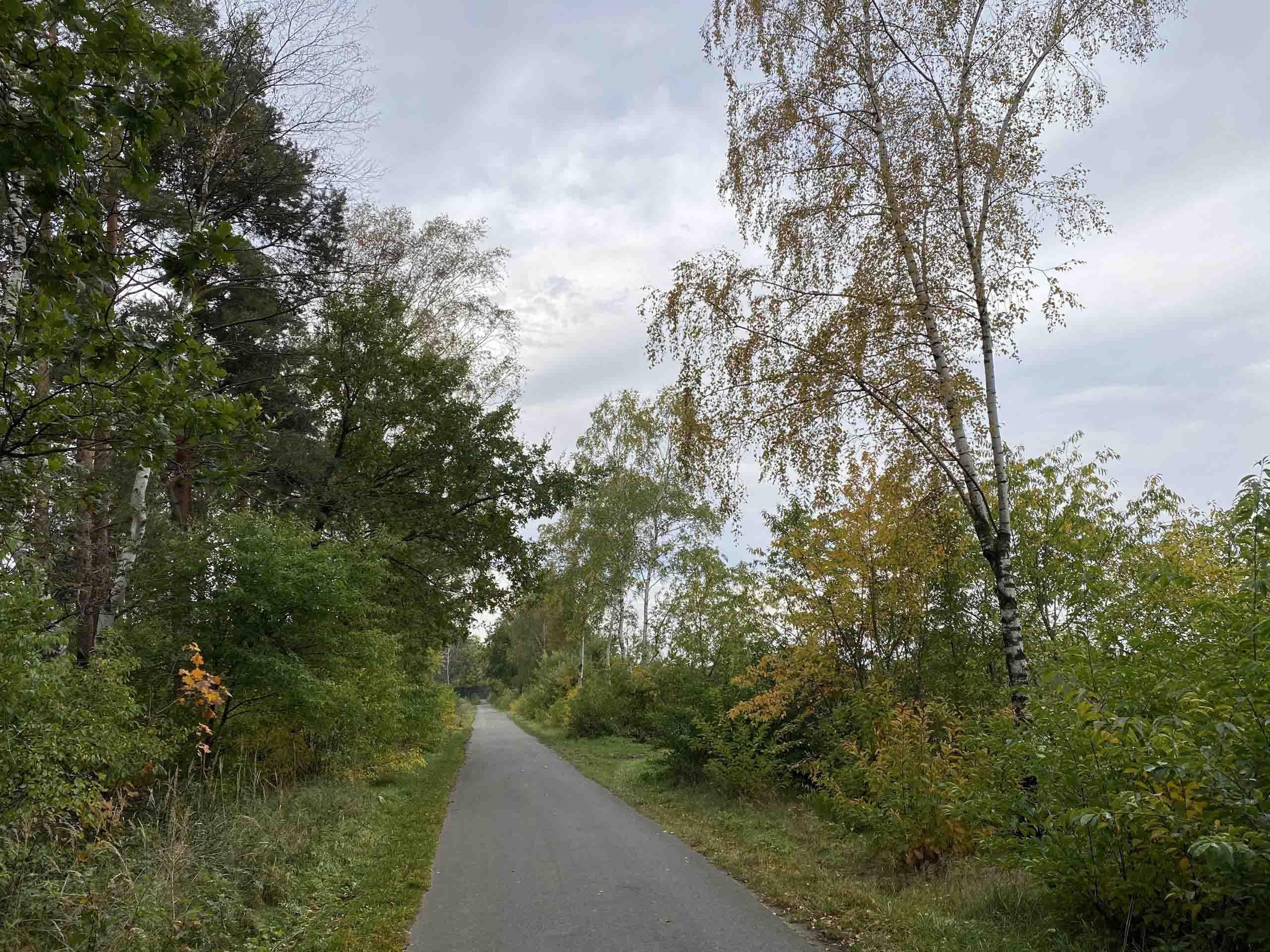 Der Radweg führt mitten durch die Natur