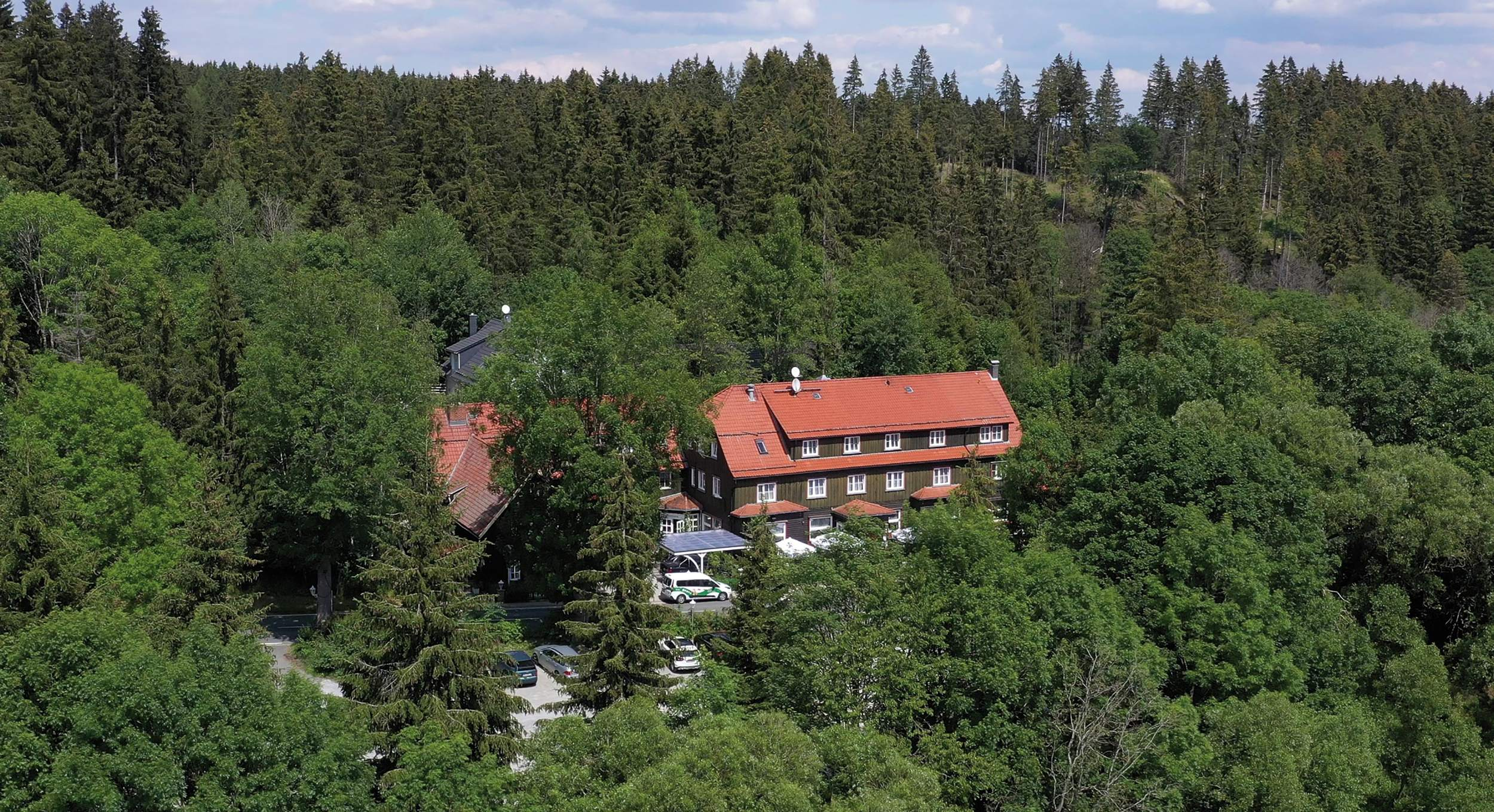 Mandelholz - Grüne Tanne