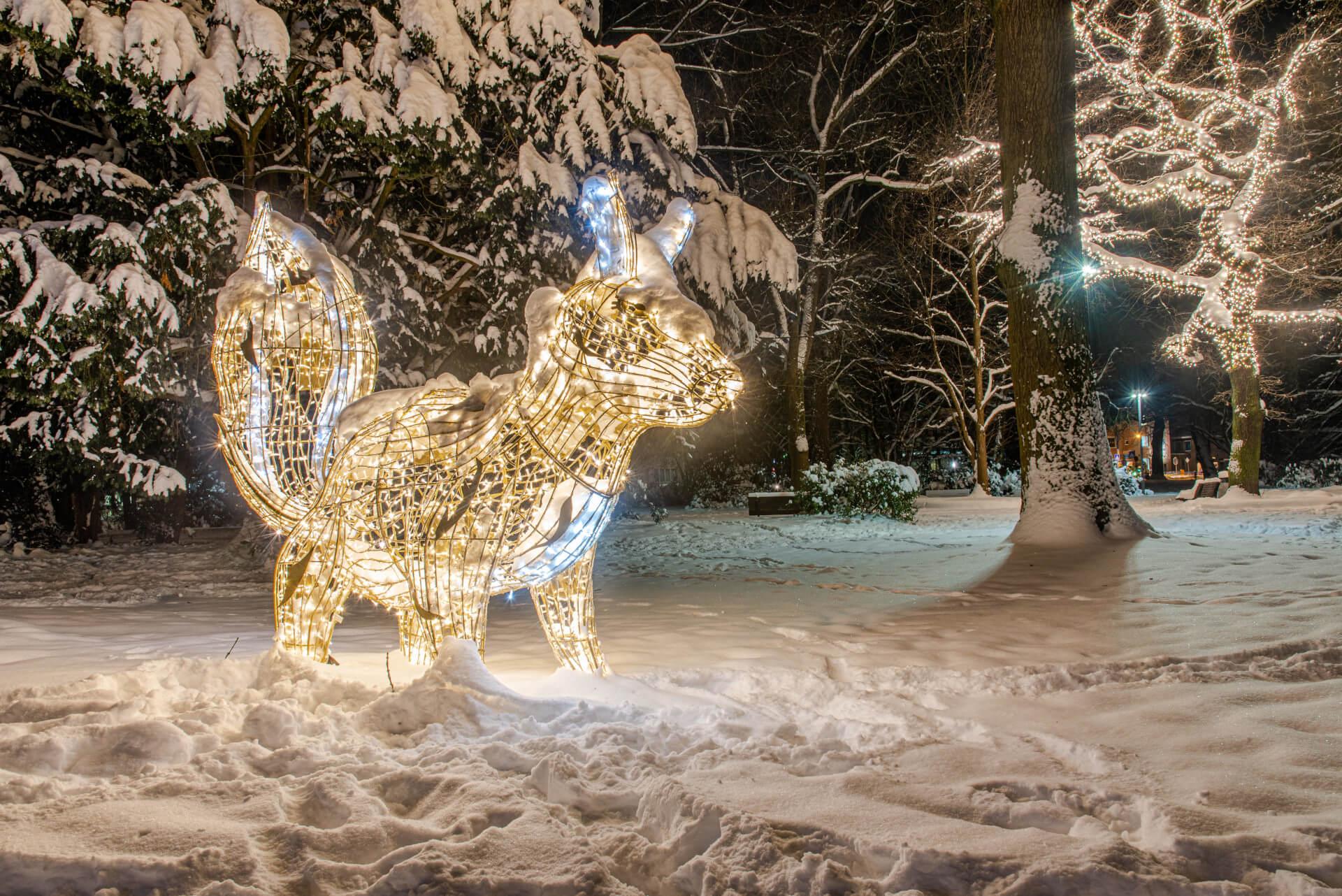 Lichterzauber im Schnee, Eichhörnchen