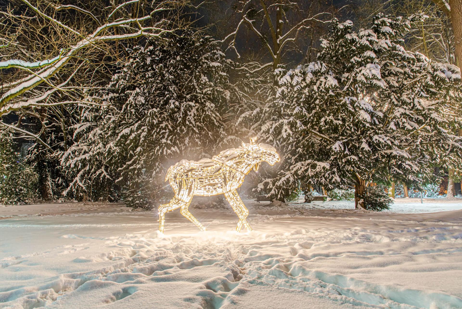 Lichterzauber im Schnee, Elch
