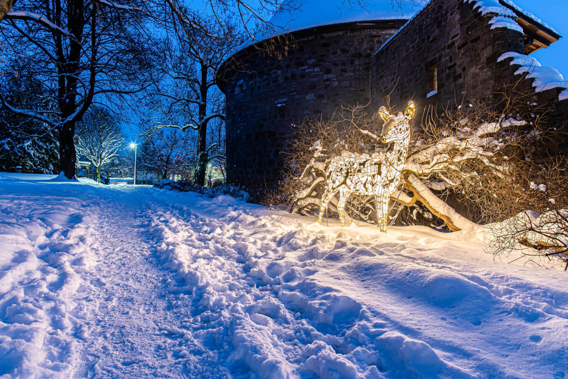 Lichterzauber im Schnee, Reh