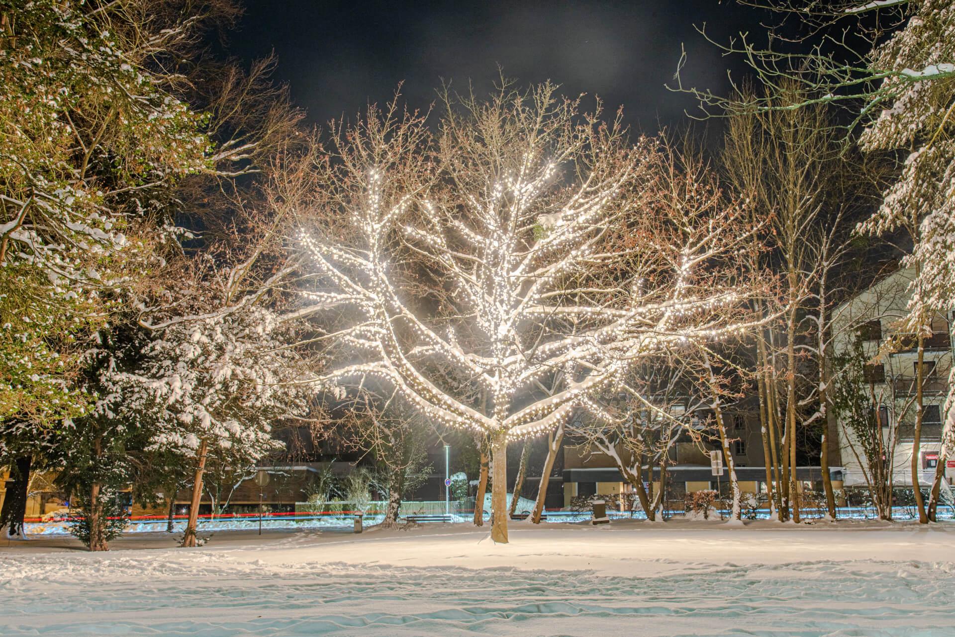 Lichterzauber im Schnee, Baum Wall