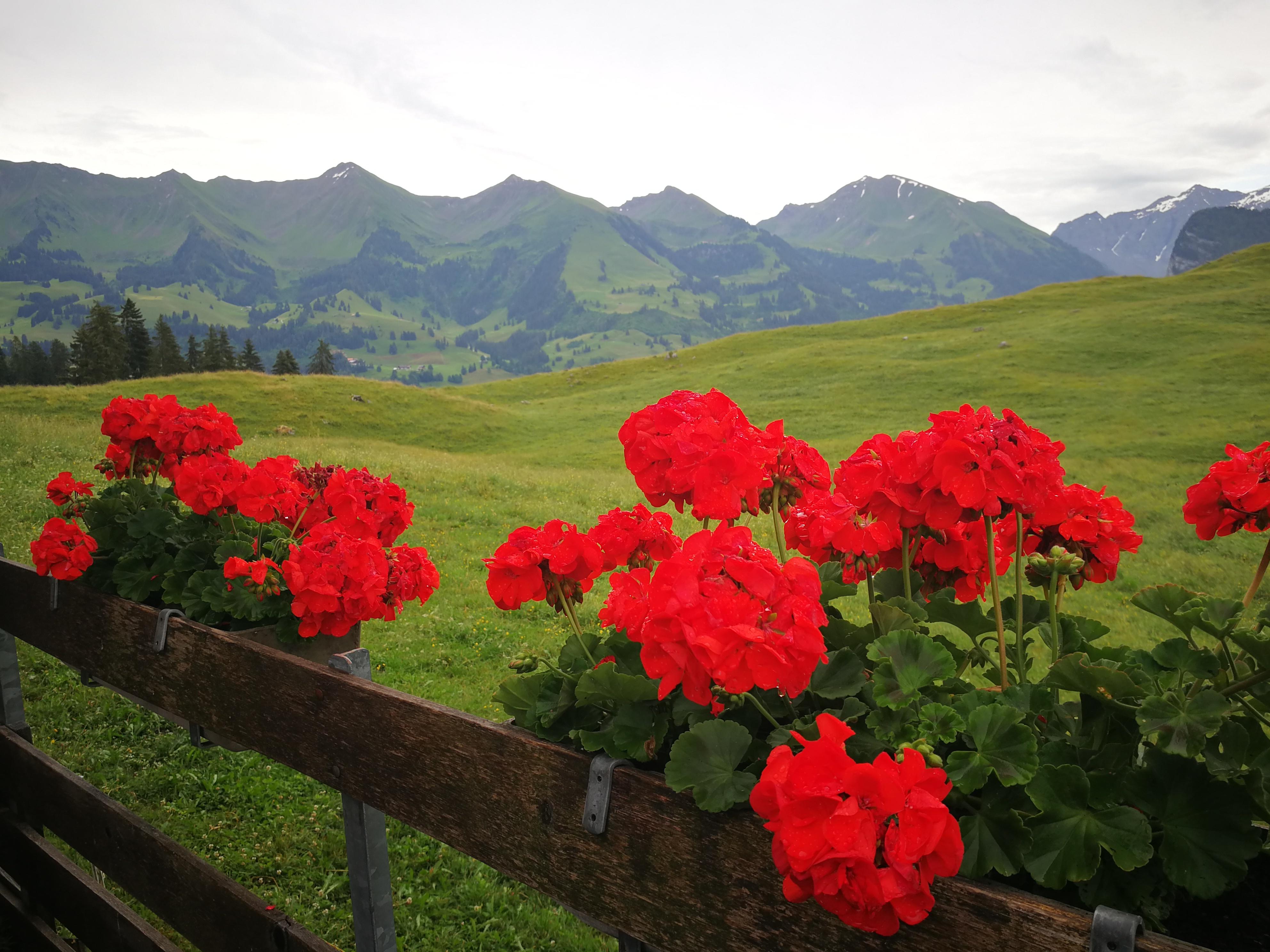 Bunte Farbtupfer auf der Alp Tschuggen
