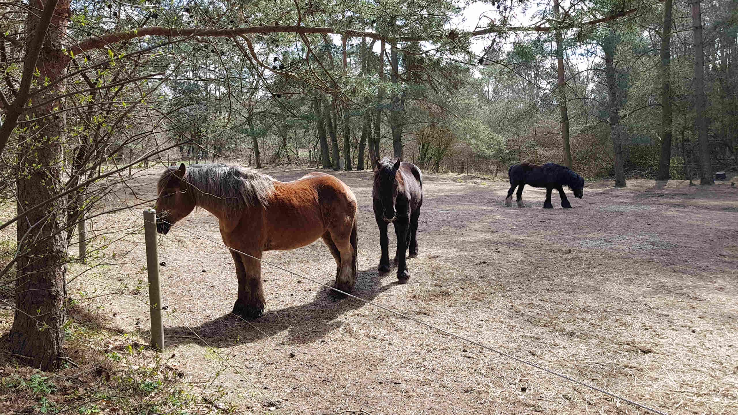 Pferde am Wegesrand in Stedden