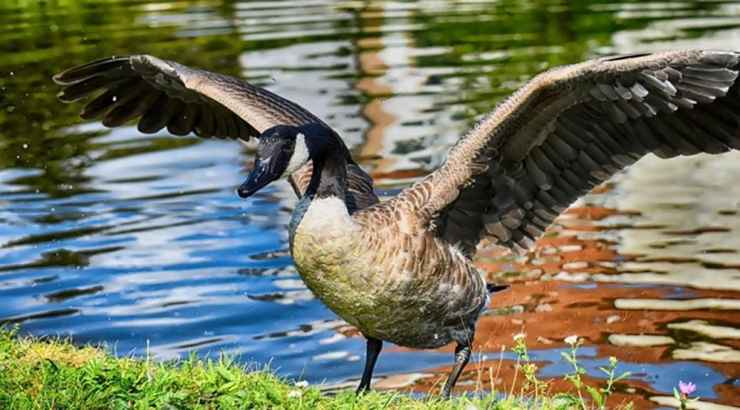 Airport Wattenmeer - Zugvögel für Einsteiger