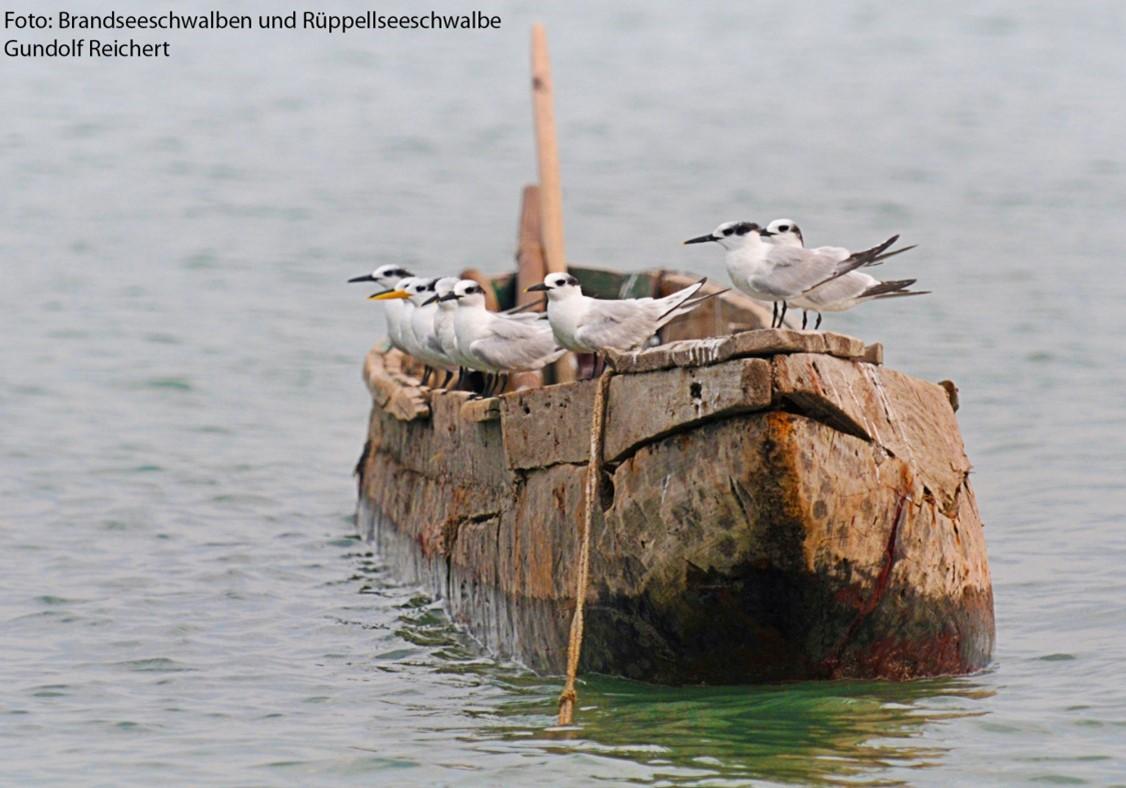 Rastplatz Nationalpark Niedersächsisches Wattenmeer - Eine Einführung in die Faszination des Vogelzuges für Einsteiger