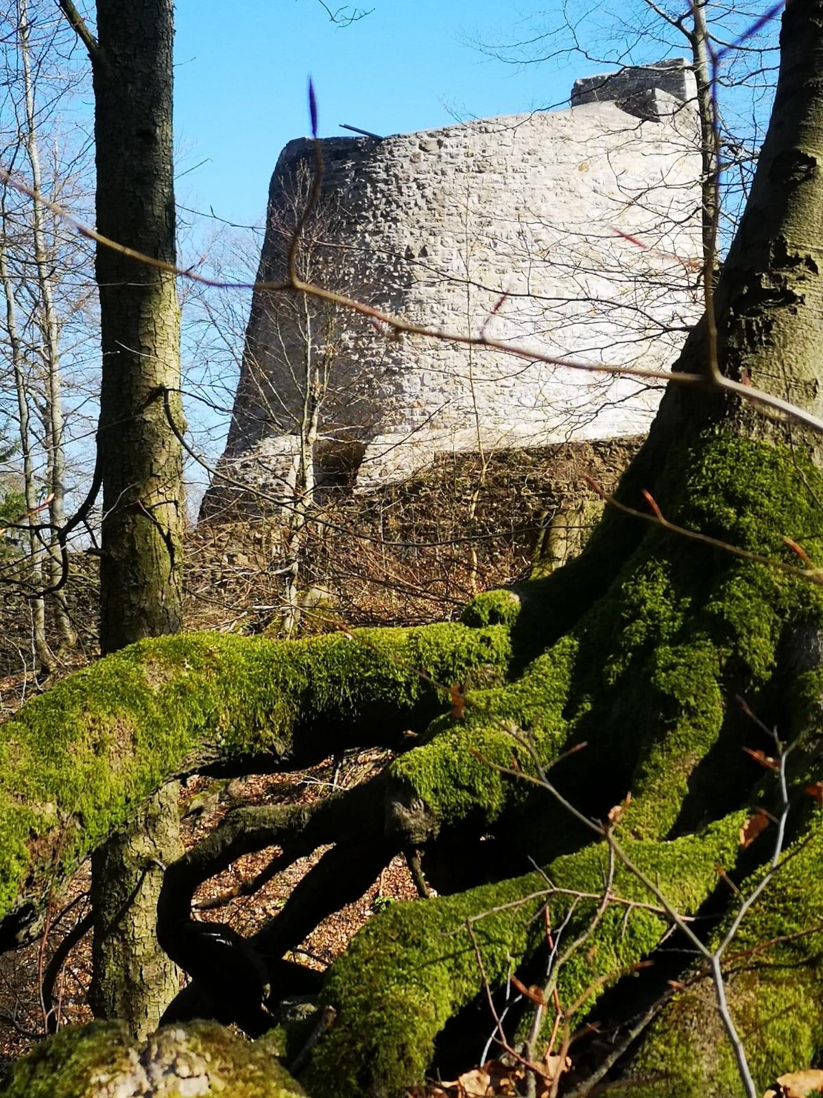 Burgfried Iburg-Ruine Bad Driburg