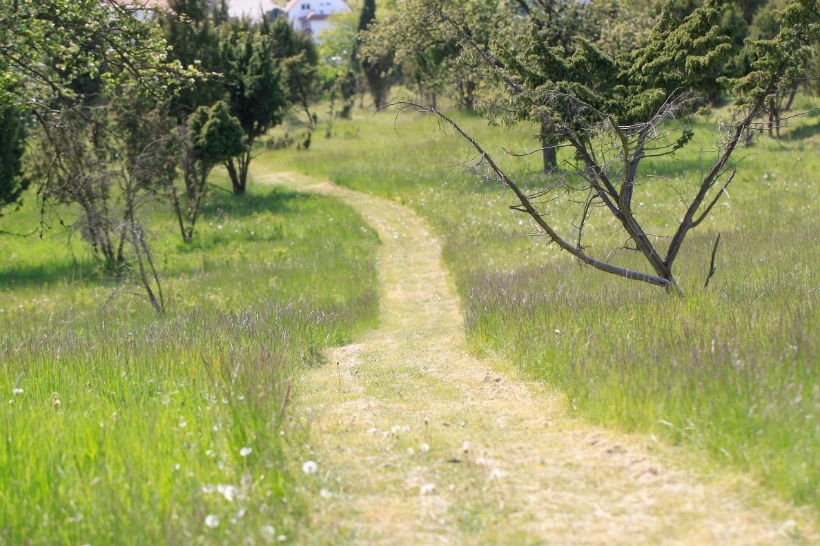 Weg durch Ostheimer Hute am Eco Pfad Muschelkalk