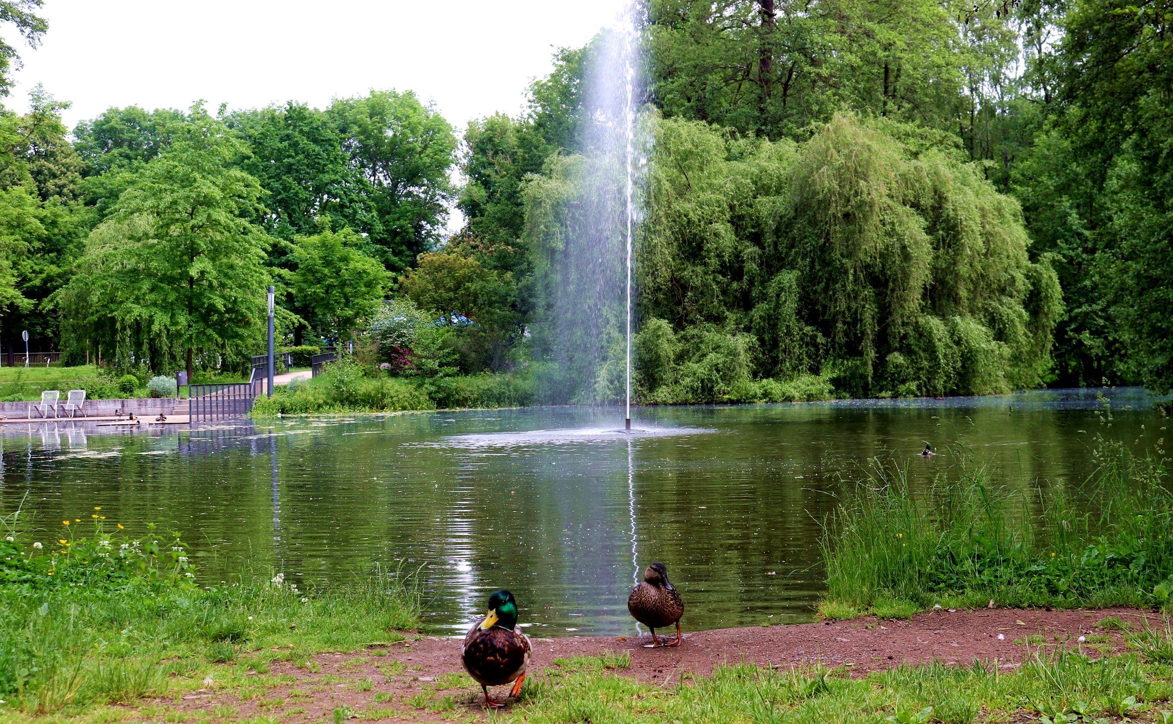 nordhausen-stadtpark-see-enten-Jessica-Piper.jpg