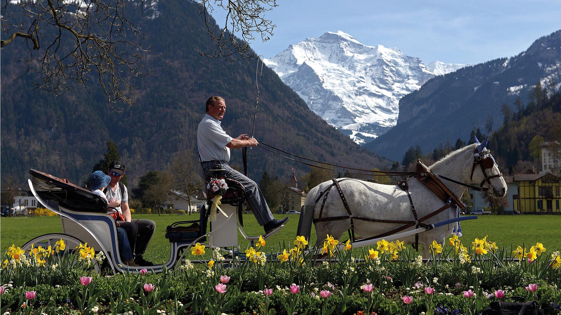 interlaken-reitschule-voegeli-pferde-kutsche-blumen