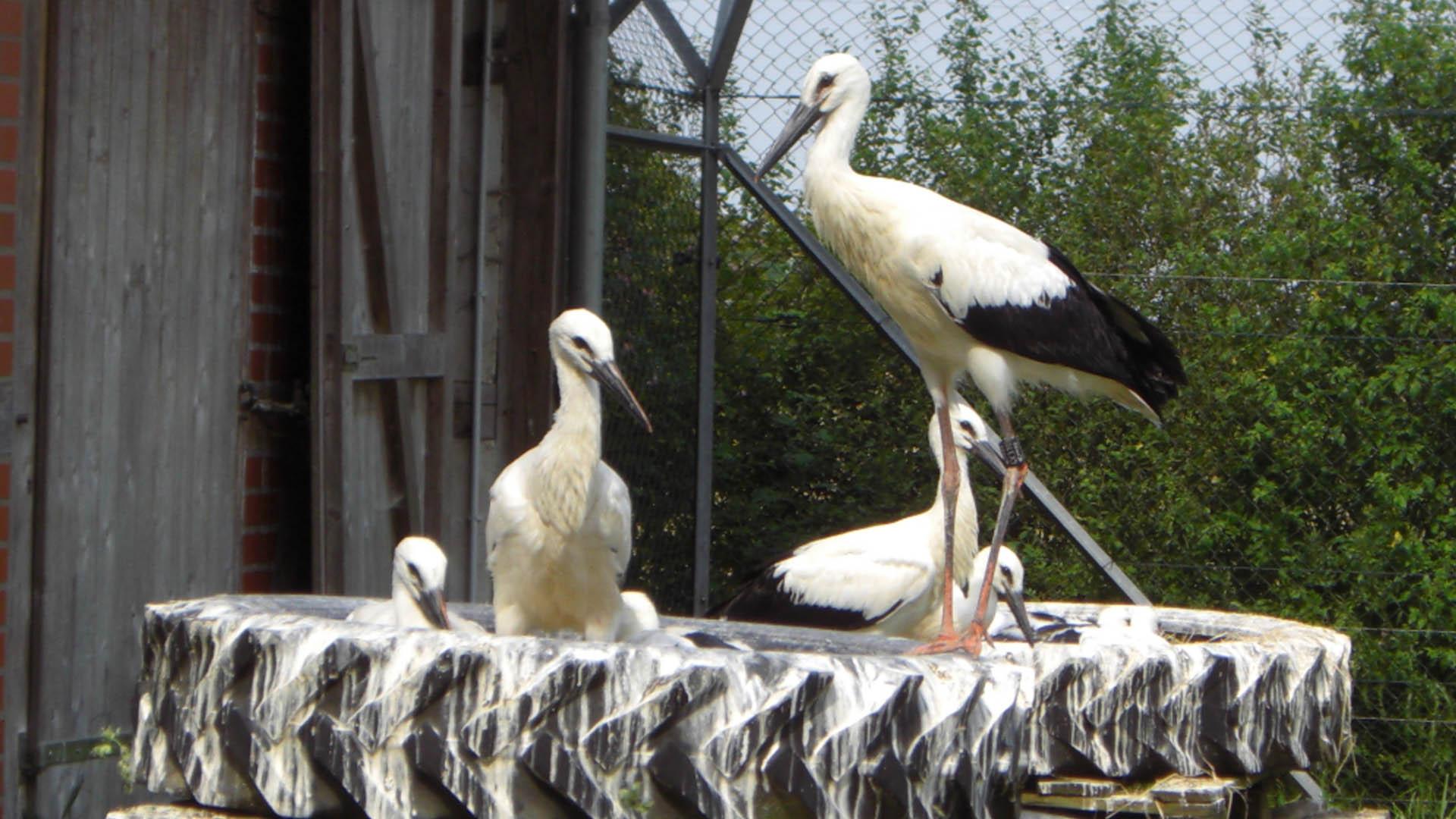 Storchenpflegestation in Verden