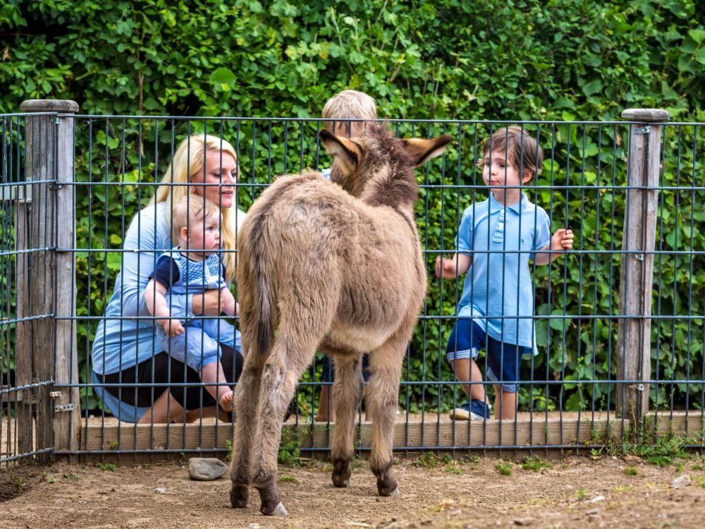 Tiergehege im Bürgerpark
